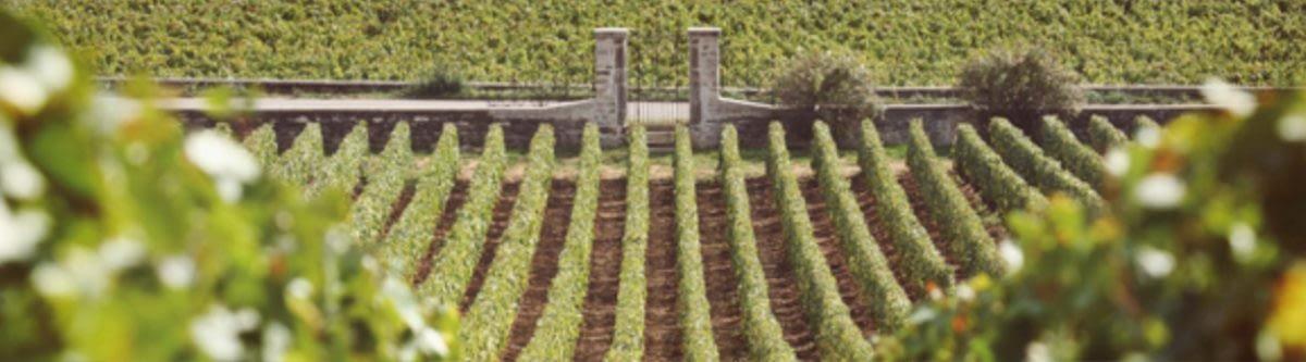 BurgundyBanner - En Primeur