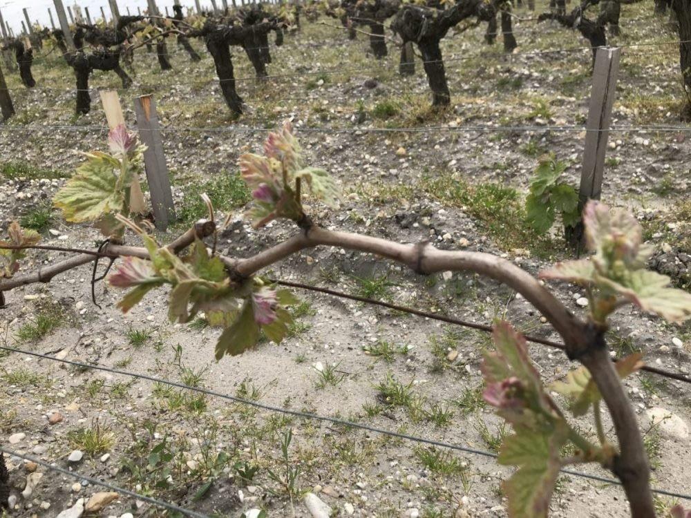 IMG 1768 1024x768 - Bordeaux 2018 - Report
